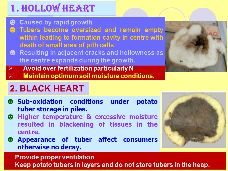 1. HOLLOW HEART 2. BLACK HEART Caused by rapid growth