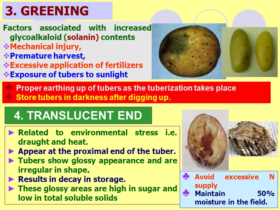 3. GREENING 4. TRANSLUCENT END