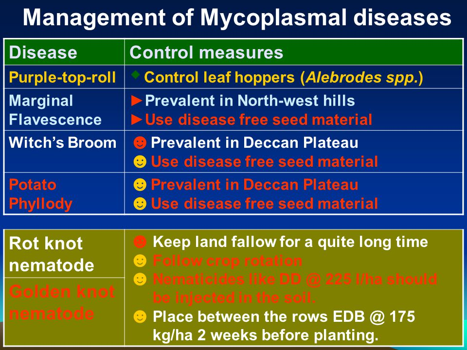 Management of Mycoplasmal diseases