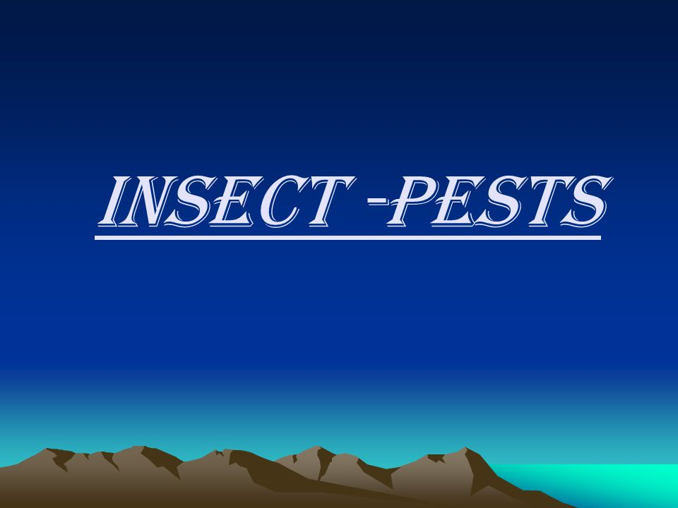 INSECT -PESTS