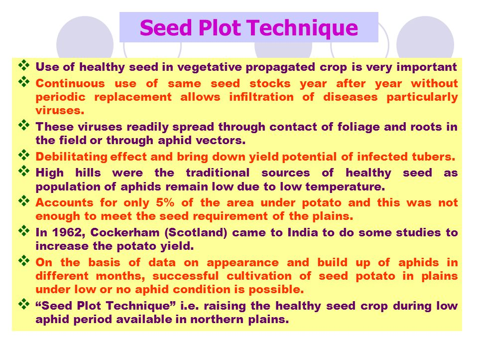 Seed Plot Technique Use of healthy seed in vegetative propagated crop is very important.
