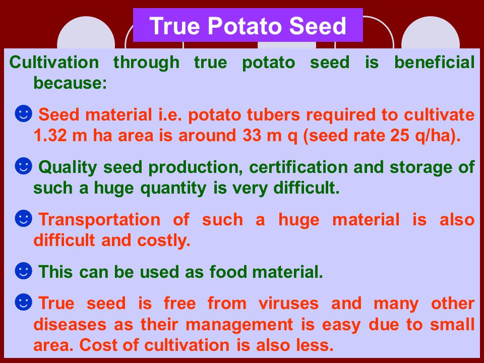 True Potato Seed Cultivation through true potato seed is beneficial because: