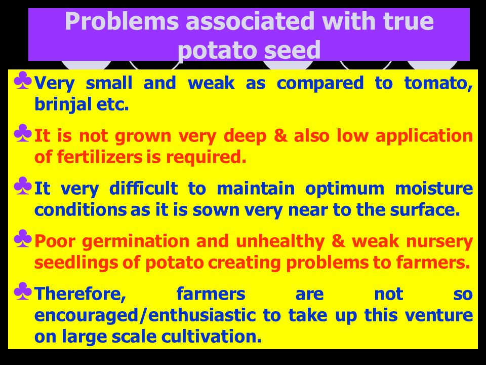 Problems associated with true potato seed