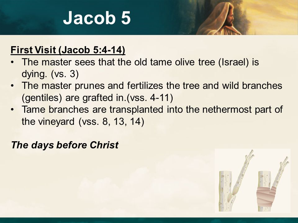 Jacob 5 First Visit (Jacob 5:4-14)