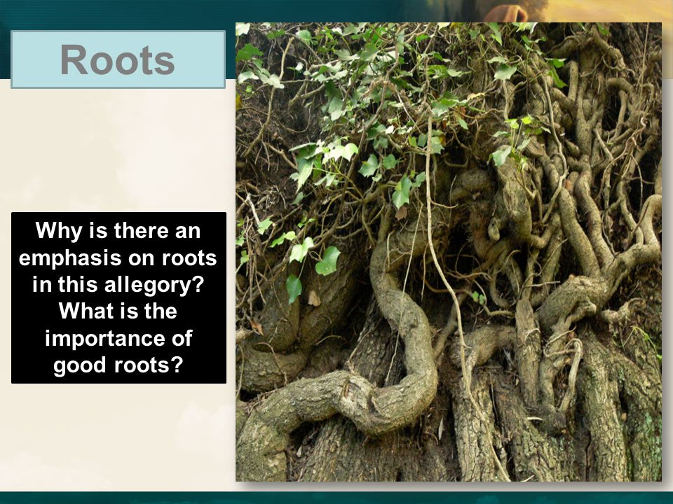 Roots Why is there an emphasis on roots in this allegory What is the importance of good roots