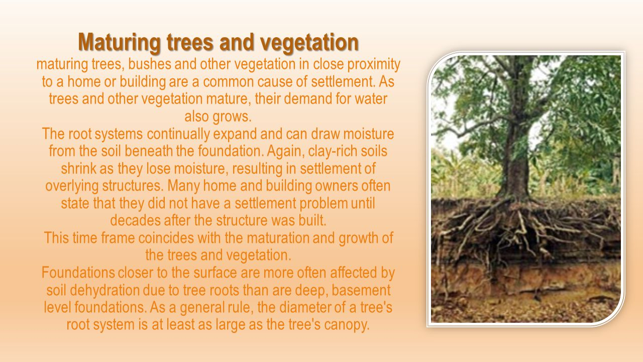 Maturing trees and vegetation maturing trees, bushes and other vegetation in close proximity to a home or building are a common cause of settlement.