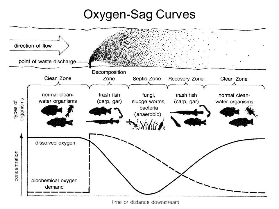 Oxygen-Sag Curves