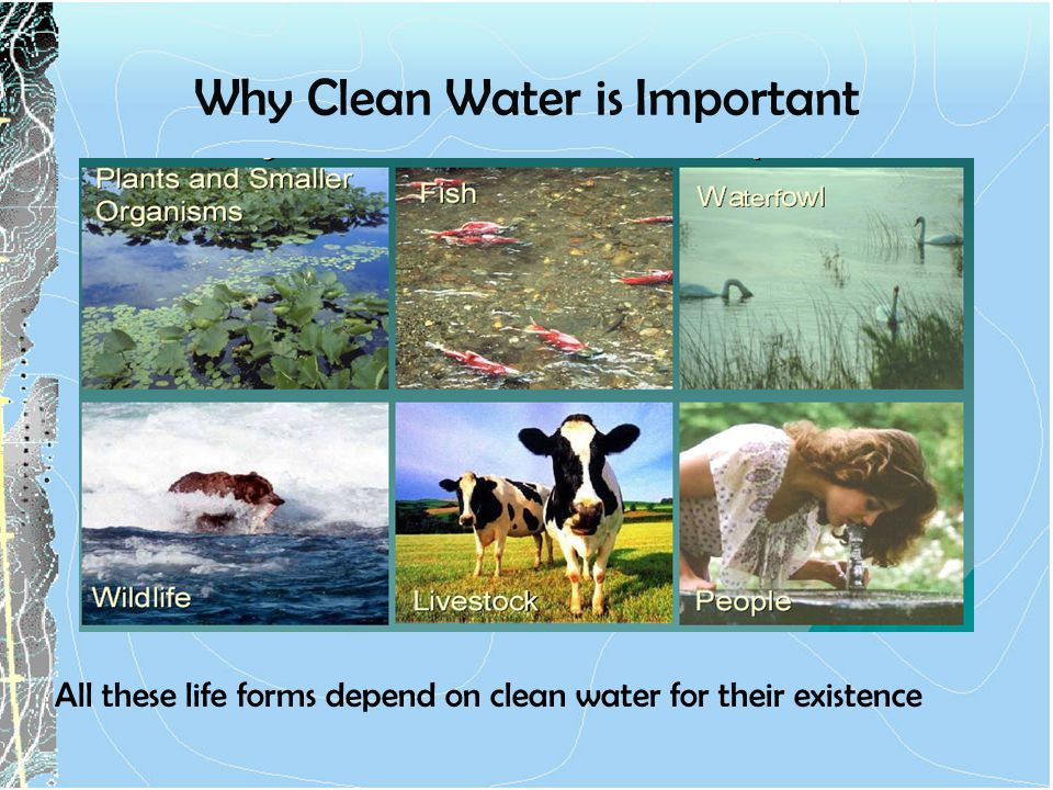 Why Clean Water is Important