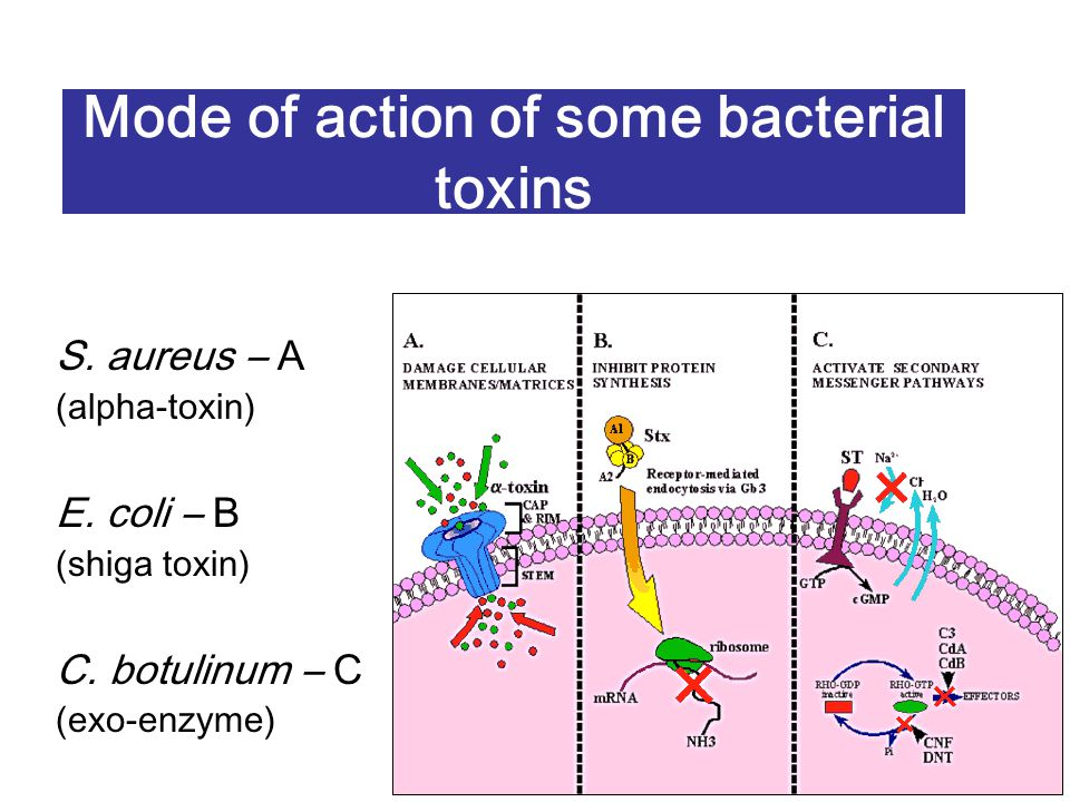 Mode of action of some bacterial toxins