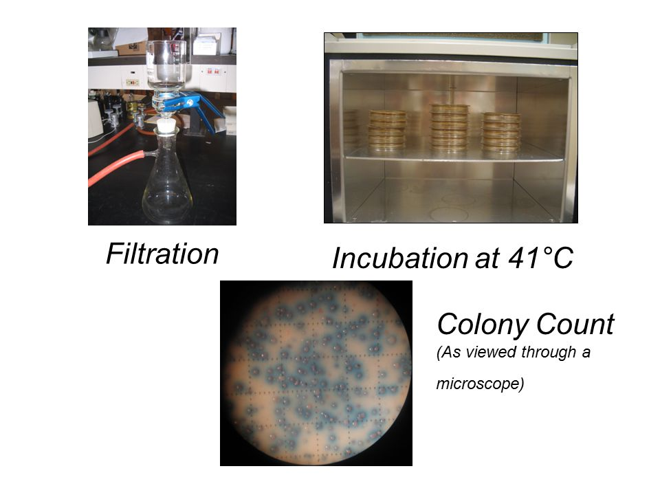 Filtration Incubation at 41°C Colony Count