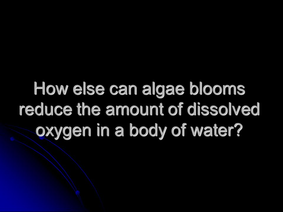 How else can algae blooms reduce the amount of dissolved oxygen in a body of water