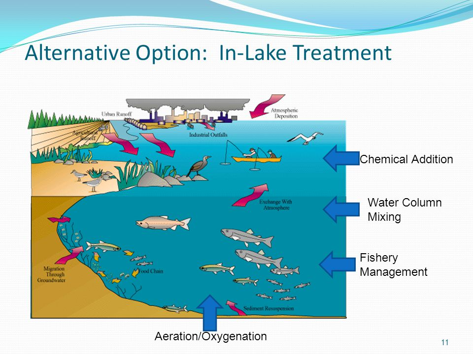 Alternative Option: In-Lake Treatment