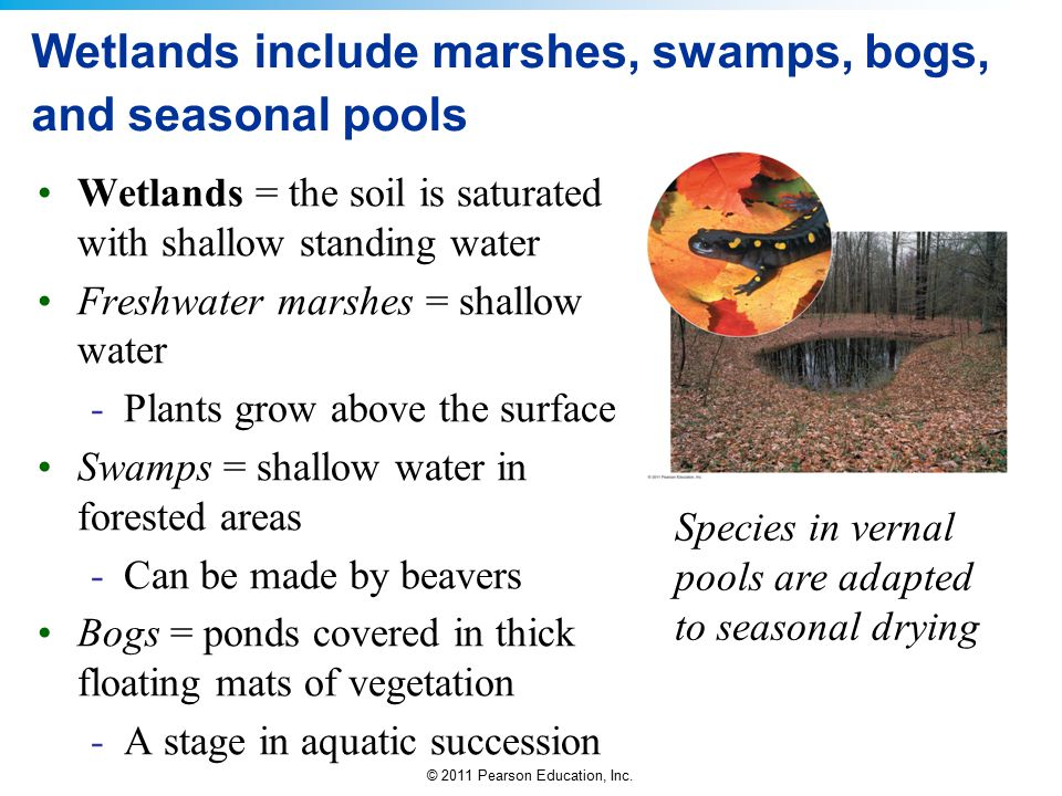 Wetlands include marshes, swamps, bogs, and seasonal pools