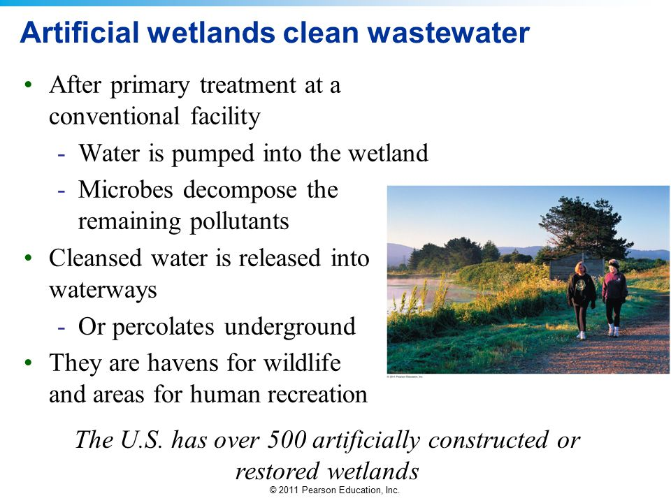 Artificial wetlands clean wastewater