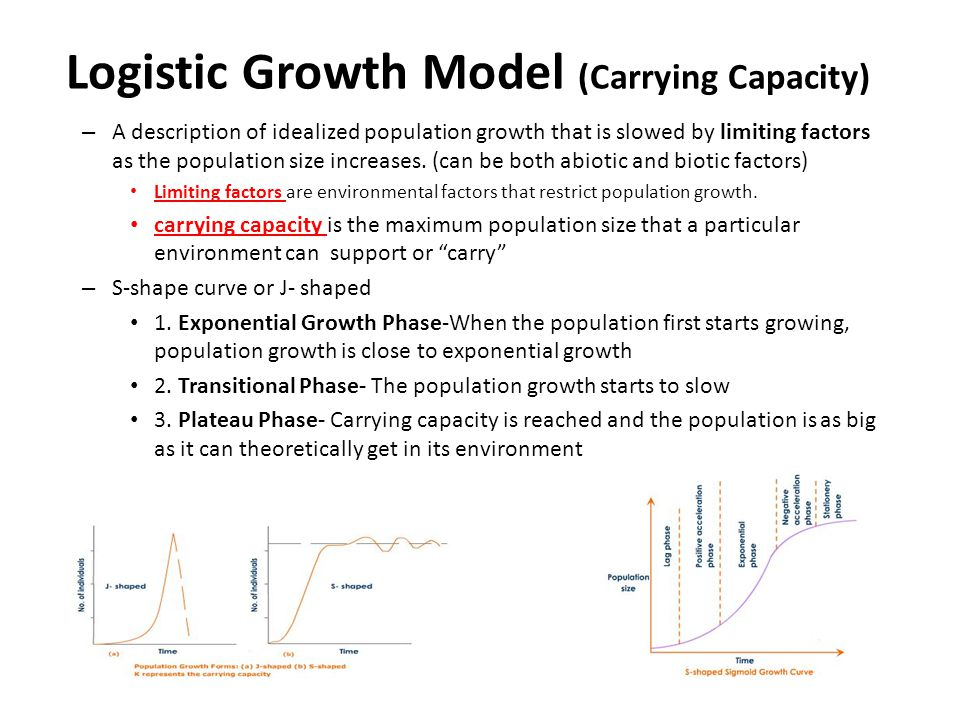 Logistic Growth Model (Carrying Capacity)