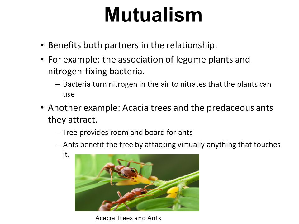 Mutualism Benefits both partners in the relationship.