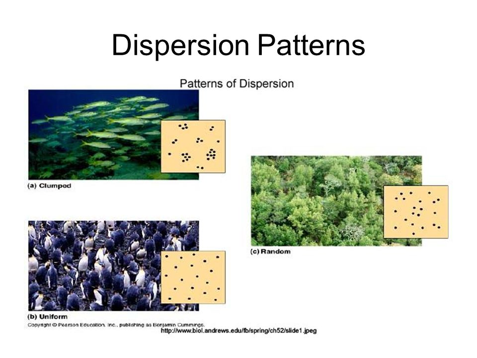 Dispersion Patterns