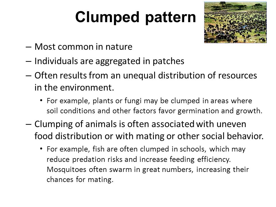 Clumped pattern Most common in nature