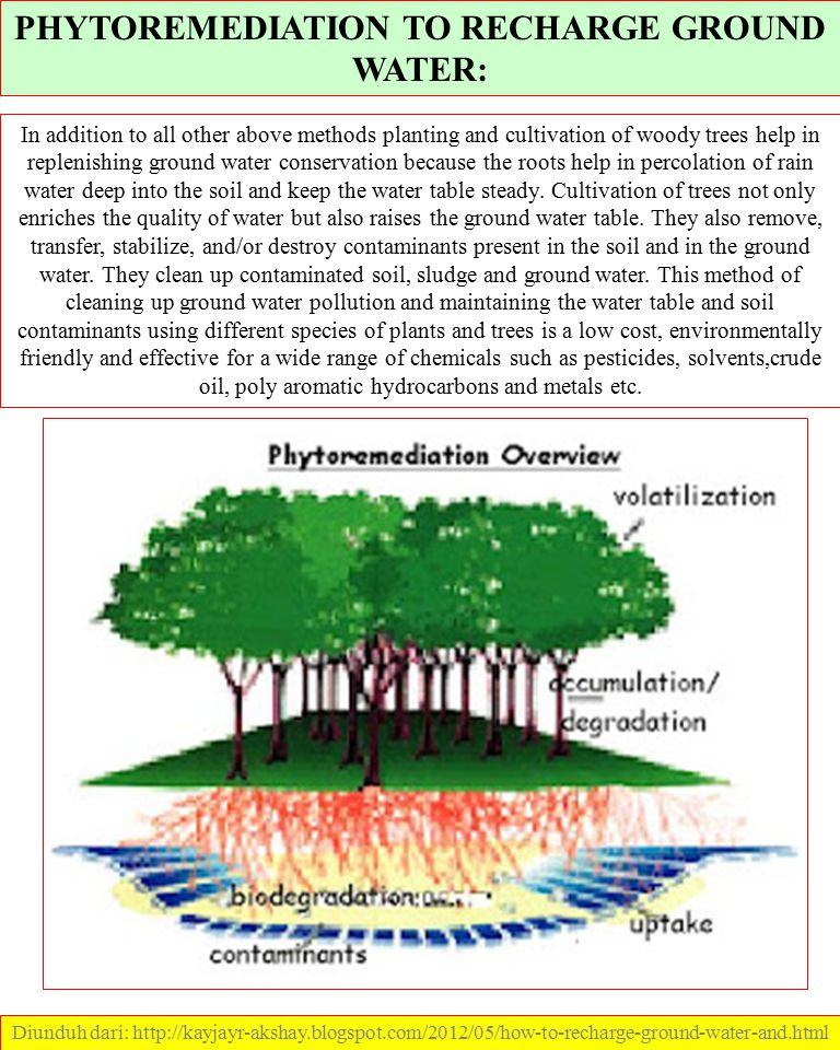PHYTOREMEDIATION TO RECHARGE GROUND WATER: