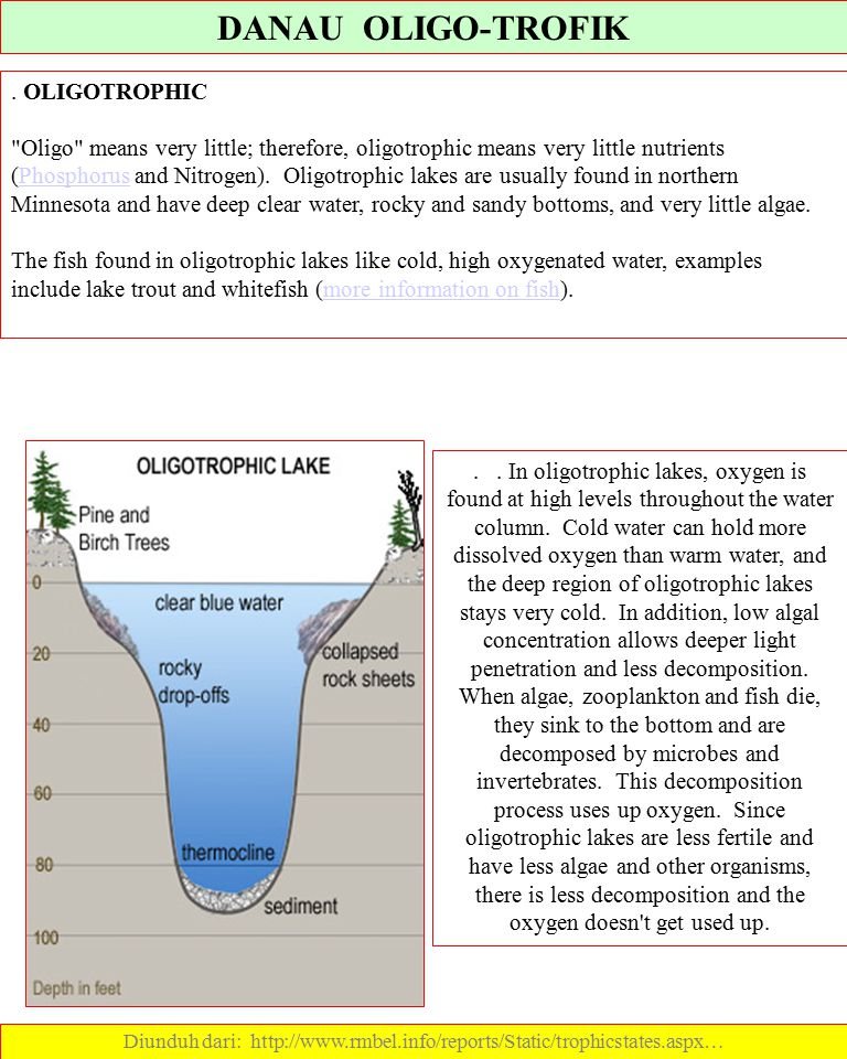 Diunduh dari: http://www.rmbel.info/reports/Static/trophicstates.aspx…