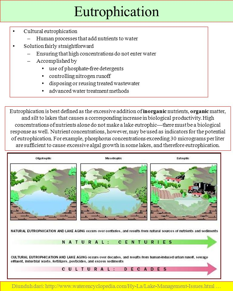 Eutrophication Cultural eutrophication