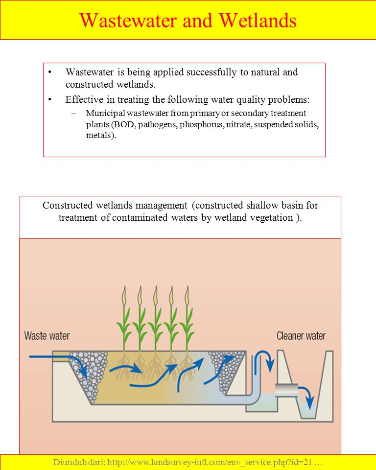 Wastewater and Wetlands