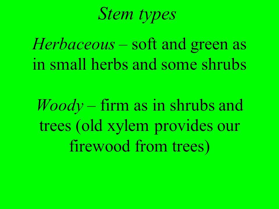 Stem types