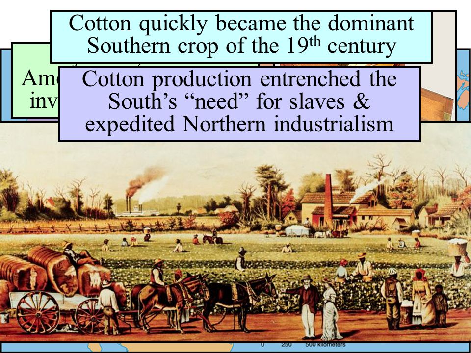 The U.S. Economy in 1800 Cotton quickly became the dominant Southern crop of the 19th century.