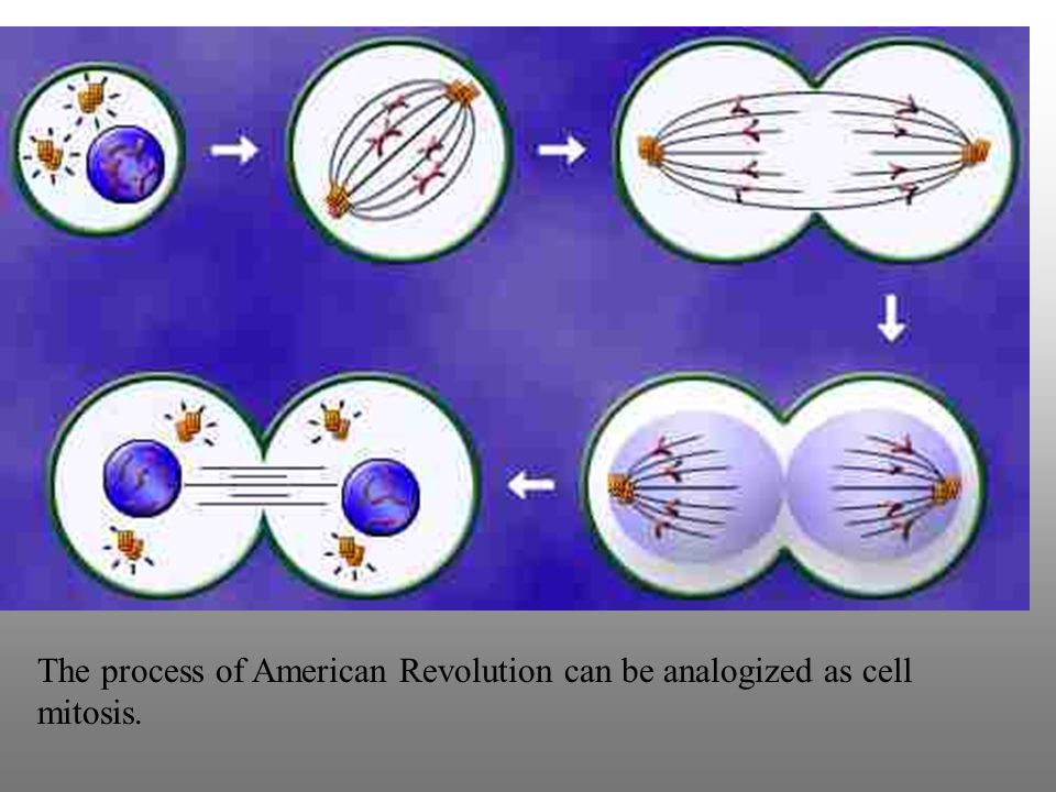 The process of American Revolution can be analogized as cell mitosis.