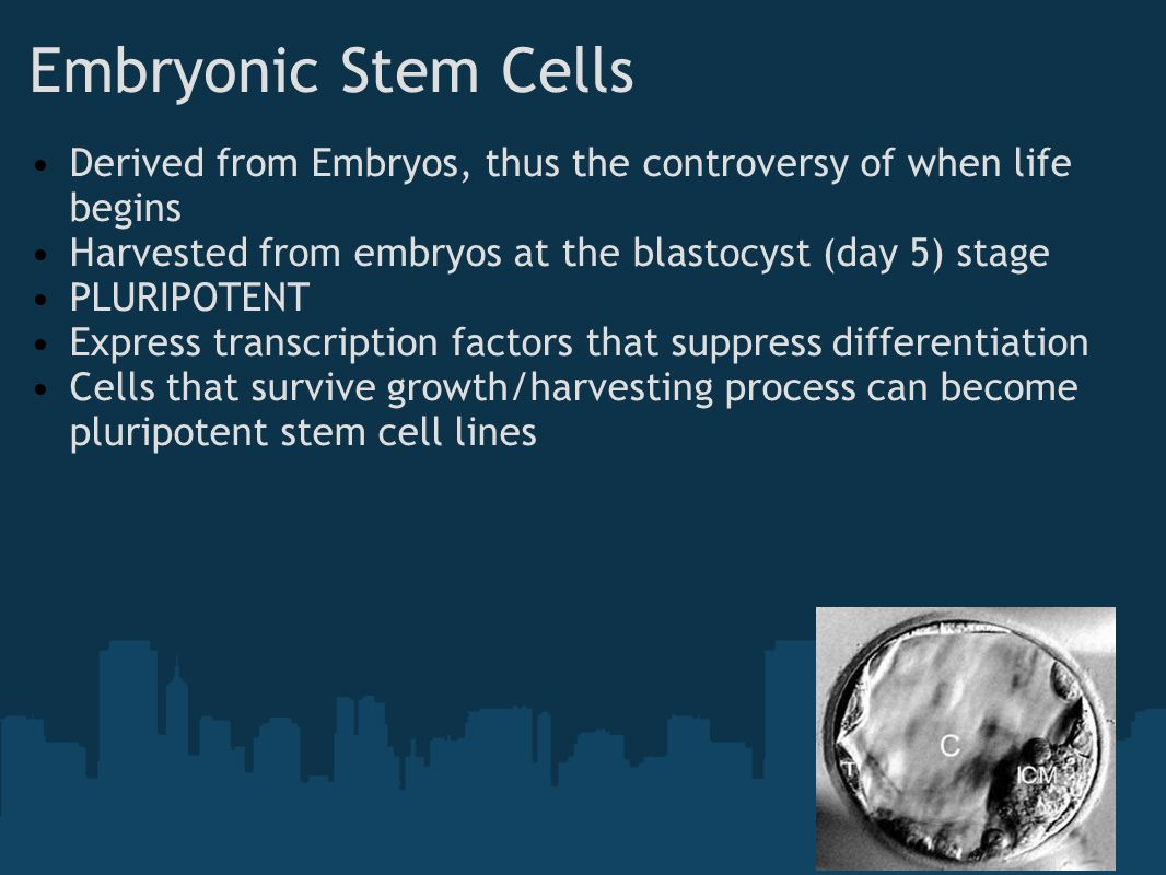 Embryonic Stem Cells Derived from Embryos, thus the controversy of when life begins. Harvested from embryos at the blastocyst (day 5) stage.