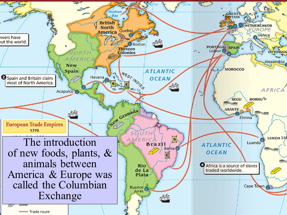 The introduction of new foods, plants, & animals between America & Europe was called the Columbian Exchange