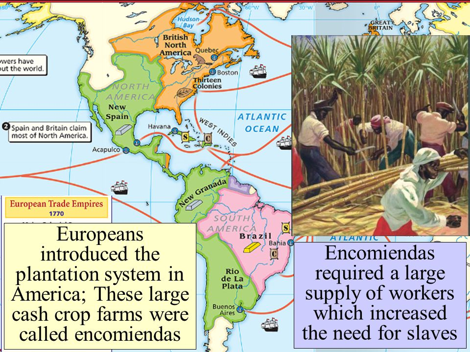 Europeans introduced the plantation system in America; These large cash crop farms were called encomiendas