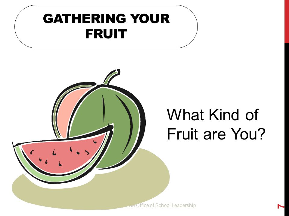 What Kind of Fruit are You
