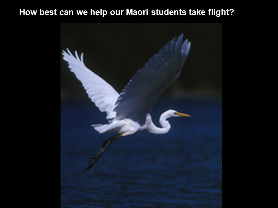 How best can we help our Maori students take flight