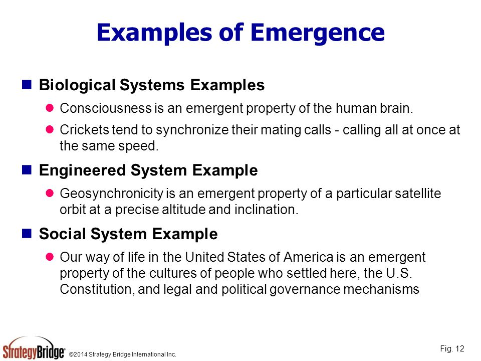 Examples of Emergence Biological Systems Examples