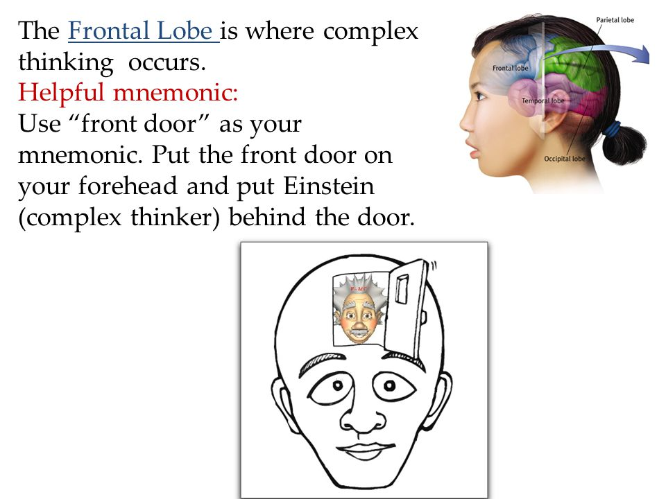The Frontal Lobe is where complex thinking occurs.
