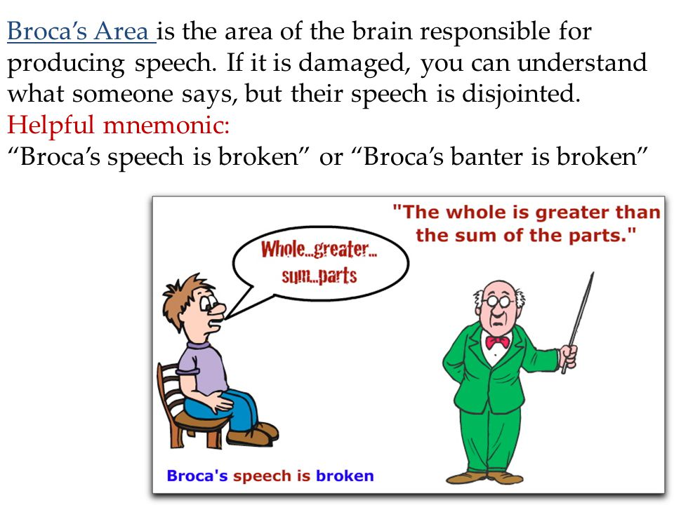 Broca's Area is the area of the brain responsible for producing speech