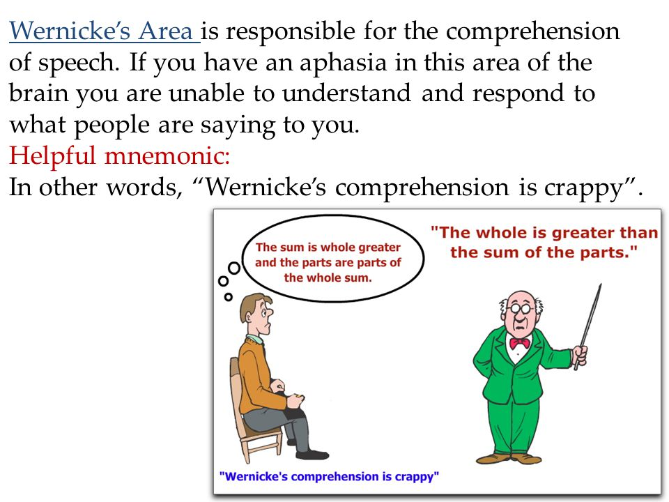 Wernicke's Area is responsible for the comprehension of speech