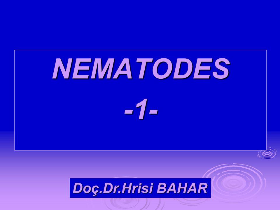 NEMATODES -1- Doç.Dr.Hrisi BAHAR