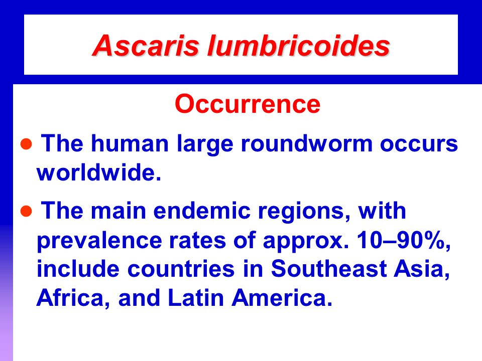 Ascaris lumbricoides Occurrence