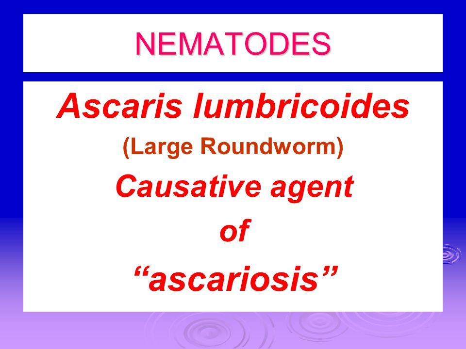 Ascaris lumbricoides ascariosis