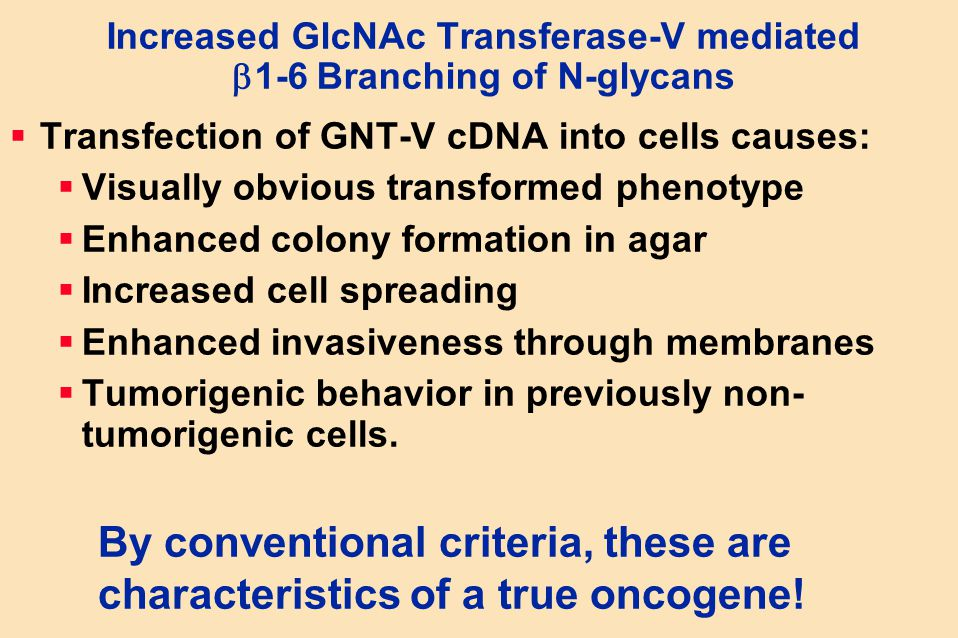 Increased GlcNAc Transferase-V mediated 1-6 Branching of N-glycans