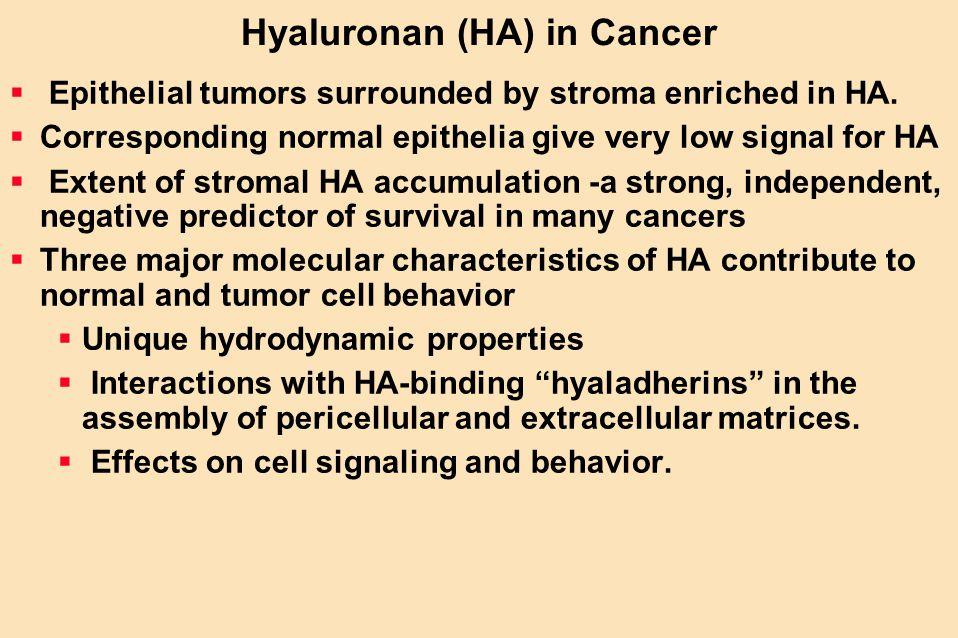 Hyaluronan (HA) in Cancer