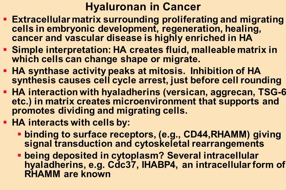 Hyaluronan in Cancer