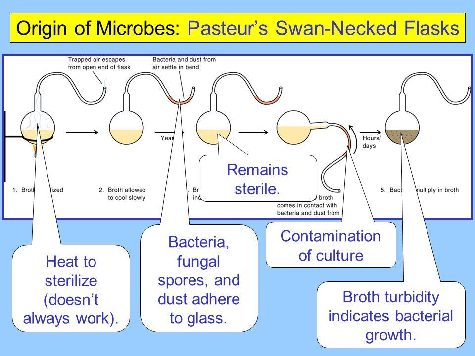 Origin of Microbes: Pasteur's Swan-Necked Flasks