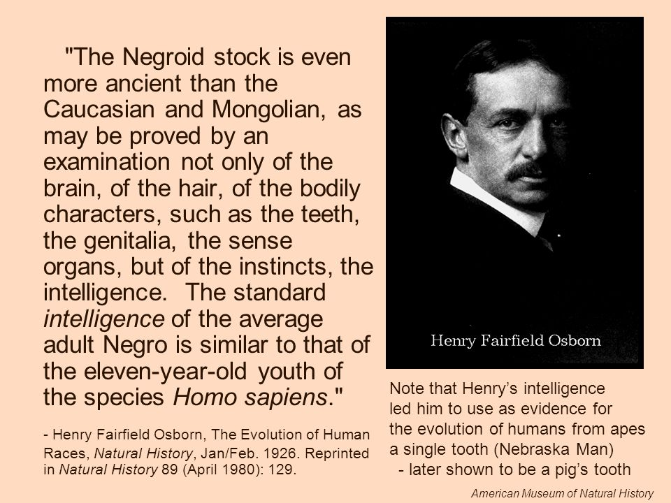 The Negroid stock is even more ancient than the Caucasian and Mongolian, as may be proved by an examination not only of the brain, of the hair, of the bodily characters, such as the teeth, the genitalia, the sense organs, but of the instincts, the intelligence. The standard intelligence of the average adult Negro is similar to that of the eleven-year-old youth of the species Homo sapiens.