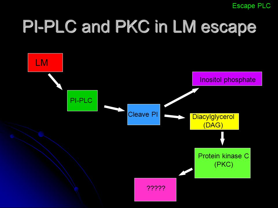 PI-PLC and PKC in LM escape