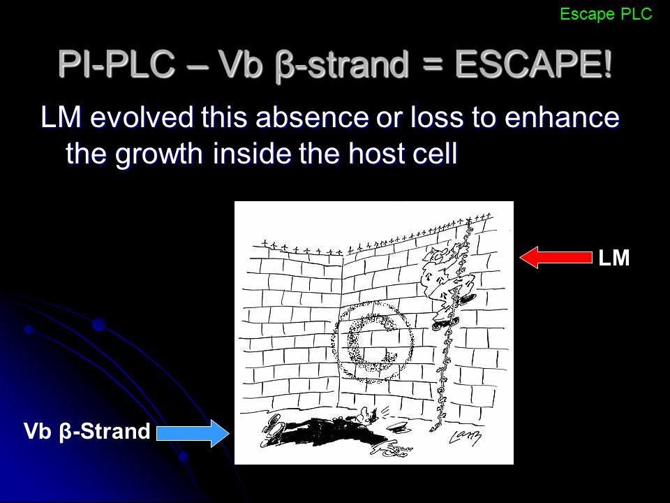 PI-PLC – Vb β-strand = ESCAPE!