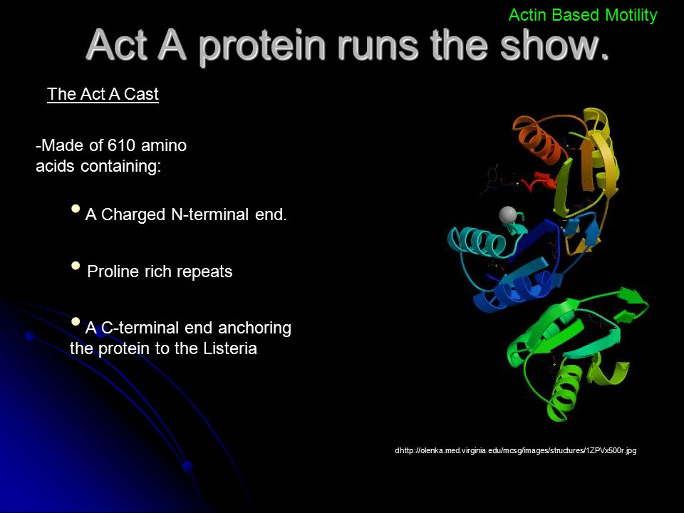 Act A protein runs the show.