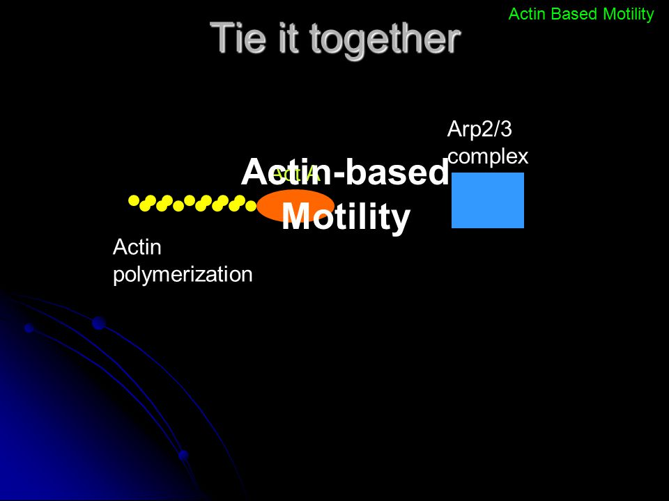Tie it together Actin-based Motility Arp2/3 complex Act A